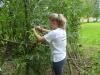 Pflege der Weidenhäuser 1